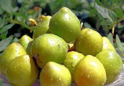 Kakadu plum க்கான பட முடிவு
